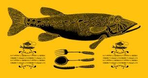 Pike in cucina Fotografie Stock Libere da Diritti