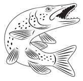 Pike fish. The figure shows a pike fish Stock Images