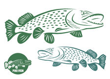 Pike fish. Vector illustration of pike fish Stock Images