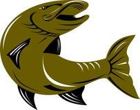 Pike fish Royalty Free Stock Photos