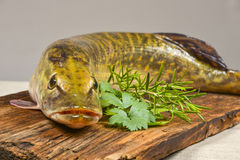 Pike fish. Esox lucius - a pike fish Stock Photo