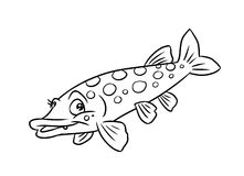Pike fish illustration coloring pages. Pike predatory fish illustration coloring pages isolated image Royalty Free Stock Image