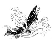 Pike fish. Ink black and white illustration of a pike fish in water Stock Photo