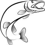 Pike. Fish - line art illustration Stock Photo