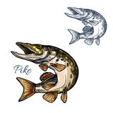 Pike fish sketch vector isolated icon Royalty Free Stock Photography