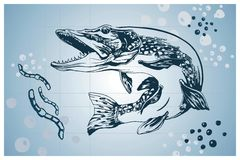 Pike fish vector handdrawn illustration Royalty Free Stock Images