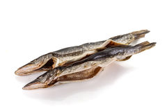 Pike fish. Pike on white background royalty free stock photo