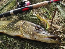 Pike Fishing Royalty Free Stock Photo