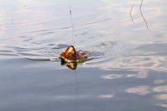 Pike fishing Stock Photography