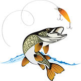 Pike and fishing lure. With water splash isolated on a white background, colored vector illustration stock illustration