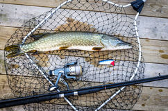 Pike fishing trophy on the bridge Stock Images
