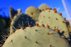 Pike and flower on a cactus Stock Photography