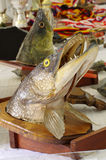 Pike head trophy Stock Photography