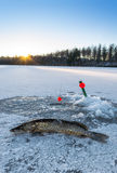 Pike ice fishing at evening Royalty Free Stock Images