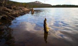 Pike pêchant les poissons du nord Photos libres de droits