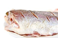 Pike perch Royalty Free Stock Photos