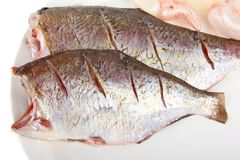 Pike perch Stock Images