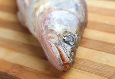 Pike perch on a  board Royalty Free Stock Photo