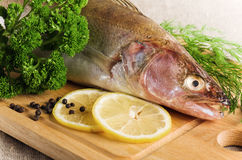 Pike perch on a kitchen board Royalty Free Stock Images