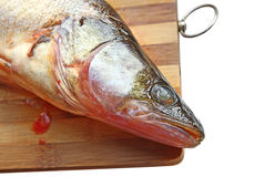 Pike perch on a wooden board Stock Photos