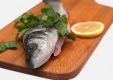 Pike perch on a wooden kitchen board Royalty Free Stock Photo