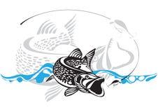 Pike, pescando señuelo