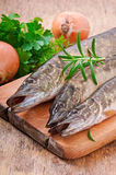 Pike raw fish Stock Images