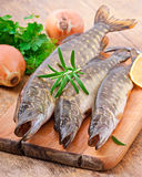 Pike raw fish Royalty Free Stock Photos