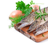 Pike raw fish Stock Photography