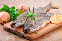 Pike raw fish Stock Photos
