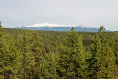 Pike`s Peak and alpine forest. Alpine forest with Pike`s Peak in the distance, Florissant, Colorado stock photo