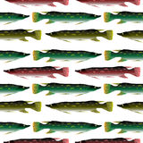Pike seamless pattern. Royalty Free Stock Image