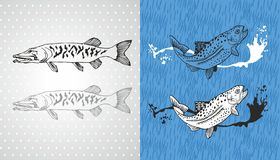 Pike and trout vector fish. Illustration Royalty Free Stock Photography