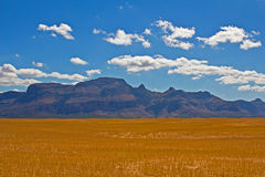 Piketberg mountain across dry wheat field Royalty Free Stock Photo