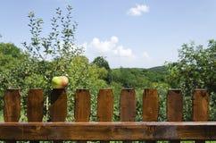 Piketomheining met appel Stock Afbeeldingen