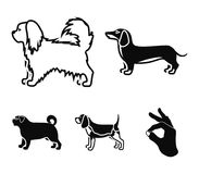 Pikinise, dachshund, pug, peggy. Dog breeds set collection icons in black style vector symbol stock illustration web. Pikinise, dachshund, pug, peggy. Dog Stock Image