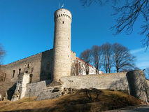 Pikk Herman torn av den Toompea kullen i Tallinn arkivbild