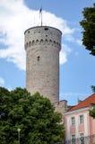 Pikk Hermann tower. Royalty Free Stock Images