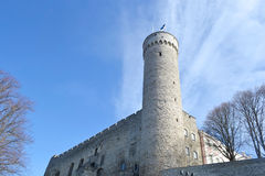 Pikk Hermann tower in Tallinn. Stock Images