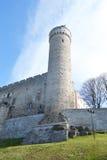 Pikk Hermann tower in Tallinn. Stock Image