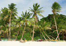 Piękna biel plaża z drzewkami palmowymi Zdjęcie Royalty Free