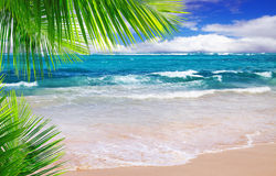 Piękna tropikalna plaża z jasnym oceanem. Obraz Stock