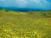 Piękne łąki w India Zdjęcia Royalty Free