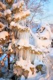 Pięknego sopla lodowa formacja na małym drzewie Zdjęcie Stock