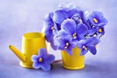 Piękni fiołków kwiaty Zdjęcie Royalty Free