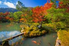 Piękni klonowi drzewa w jesieni, Japonia Obrazy Stock