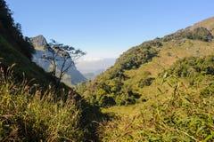 Piękni wycieczkuje ślada w tropikalnym lesie deszczowym Obrazy Stock