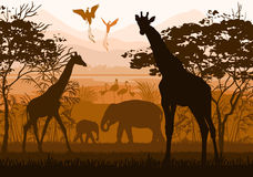 Piękno natura z dzikimi zwierzętami (żyrafa, słoń, flaming, Zdjęcia Royalty Free