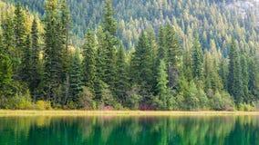 Piękno w naturze Zdjęcie Royalty Free