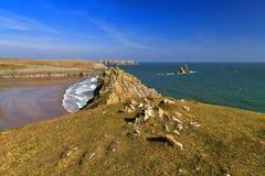 Piękny Dziki Skalisty i niewygładzony Pembroke wybrzeże nad Broard przystani południe Wyrzucać na brzeg Obrazy Royalty Free